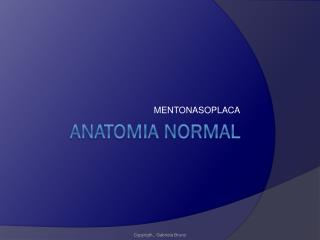 ANATOMIA NORMAL