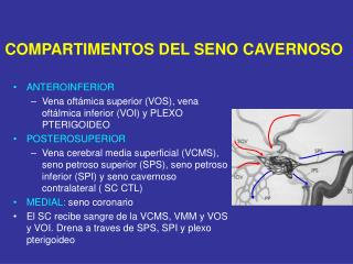 ANTEROINFERIOR Vena oftámica superior (VOS), vena oftálmica inferior (VOI) y PLEXO PTERIGOIDEO