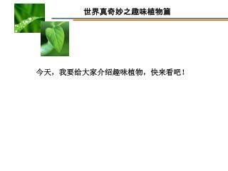 今天,我要给大家介绍趣味植物,快来看吧!