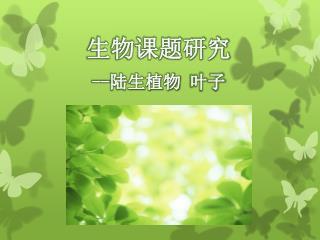 生物课题研究 -- 陆生植物 叶子