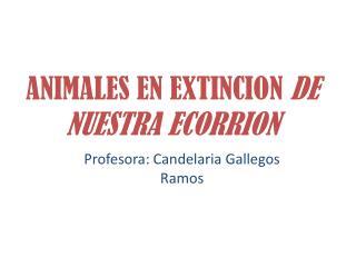 ANIMALES EN EXTINCION DE NUESTRA ECORRION