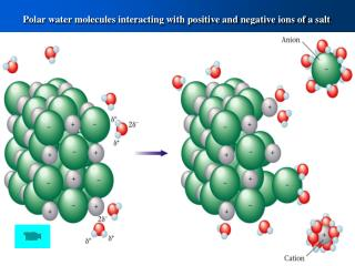 Polar water molecules interacting with positive and negative ions of a salt .