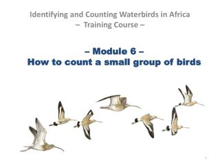 – Module 6 – How to count a small group of birds