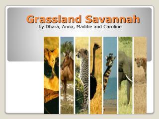 Grassland Savannah