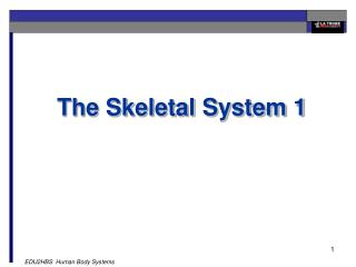 The Skeletal System 1