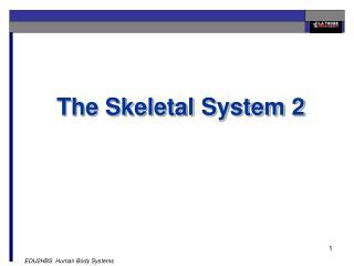 The Skeletal System 2