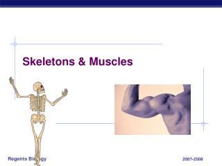 Skeletons & Muscles