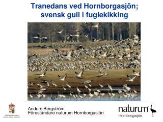 Tranedans ved Hornborgasjön; svensk gull i fuglekikking