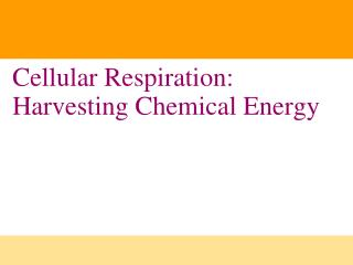 Cellular Respiration: Harvesting Chemical Energy