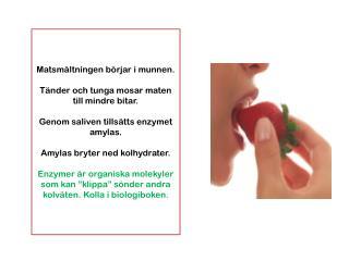 Matsmältningen börjar i munnen. Tänder och tunga mosar maten till mindre bitar.