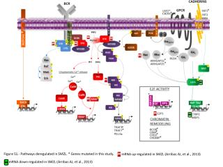 Figure S1.- Pathways deregulated in SMZL. * Genes mutated in this study.