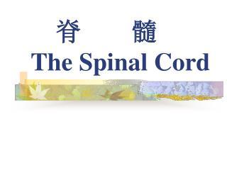 脊 髓 The Spinal Cord