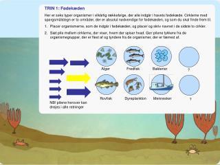 Fødekæden i havet