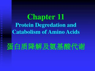 Chapter 11 P rotein  D egredation and  C atabolism of  A mino  A cids 蛋白质降解及氨基酸代谢
