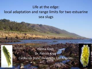 Life at the edge: local adaptation and range limits for two estuarine sea slugs