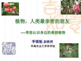 植物,人类最亲密的朋友 ---- 带您认识身边的美丽植物 李镇魁 副教授 华南农业大学林学院
