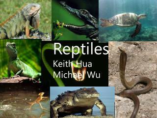 Reptiles Keith Hua Michael Wu