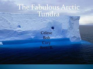 The Fabulous Arctic Tundra .