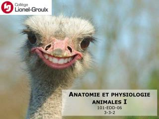 Anatomie et physiologie animales I 101-EDD-06 3-3-2