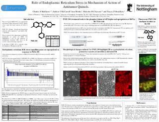 Role of Endoplasmic Reticulum Stress in Mechanism of Action of Antitumor Quinols.