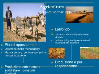 Agricoltura nei paesi sottosviluppato
