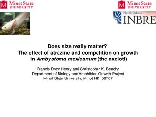 Does size really matter? The effect of atrazine and competition on growth