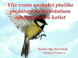 Vedoucí práce: Mgr. Petr Veselý