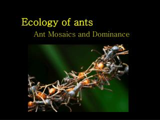 Ecology of ants