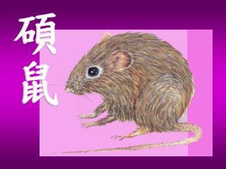 碩鼠碩鼠,