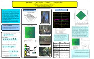 Nocturnal CO 2  Fluxes and Understory Drainage Flows