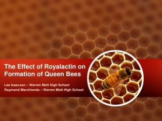 The Effect of Royalactin on Formation of Queen Bees