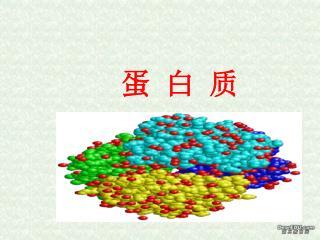 蛋 白 质