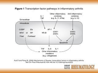 Aud D and Peng SL (2006) Mechanisms of Disease: transcription factors in inflammatory arthritis
