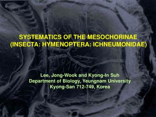 SYSTEMATICS OF THE MESOCHORINAE (INSECTA: HYMENOPTERA: ICHNEUMONIDAE)