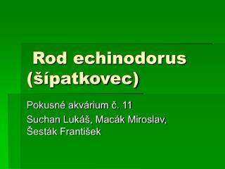 Rod echinodorus (šípatkovec)