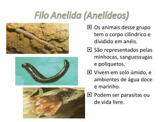 Filo Anelida (Anelídeos)