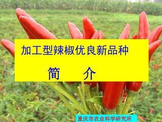 加工型辣椒优良新品种 简 介