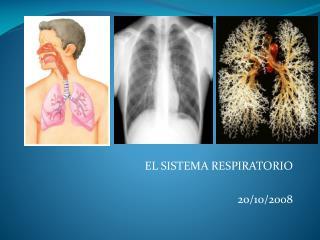 EL SISTEMA RESPIRATORIO 20/10/2008