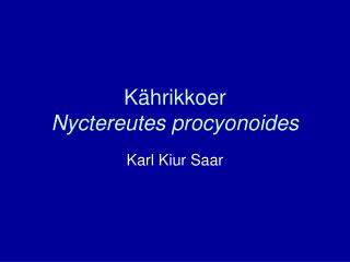 Kährikkoer Nyctereutes procyonoides