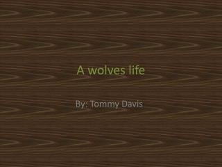 A wolves life