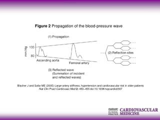 Figure 2  Propagation of the blood-pressure wave