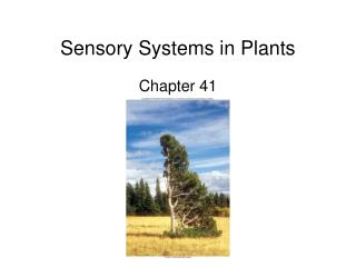 Sensory Systems in Plants