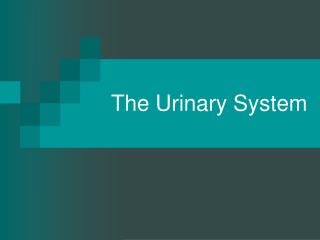The Urinary System