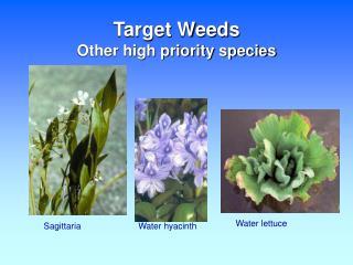 Target Weeds Other high priority species