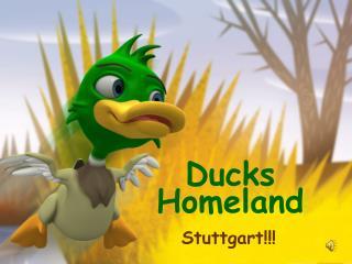 Ducks Homeland