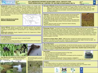 History of introduction of salvinia Weevils in Okavango Delta