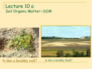 Lecture 10 a Soil Organic Matter = SOM