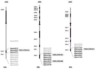 Xgwm1249 Xgwm0501 Xgwm0047 Xgwm0877 Xgwm1067 Xgwm1070 Xgwm0526 Xgwm0619 Xgwm1027 Xgwm0739