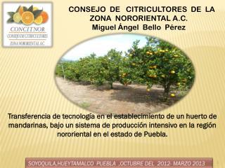 CONSEJO DE CITRICULTORES DE LA ZONA NORORIENTAL A.C. Miguel Ángel Bello Pérez
