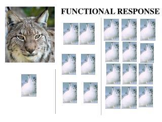 FUNCTIONAL RESPONSE